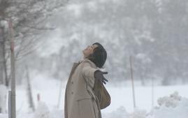 冬のサクラ今井美樹.png