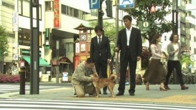 新参者阿部寛溝端淳平犬と散歩.jpg